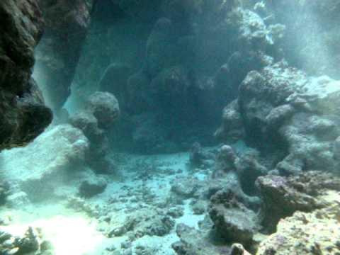 samadai, dolphin, east, shaab, nurkowanie, diving, scuba, underwater, tauchen, unterwasser