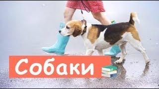 Понимают Ли Собаки Человеческую Речь?