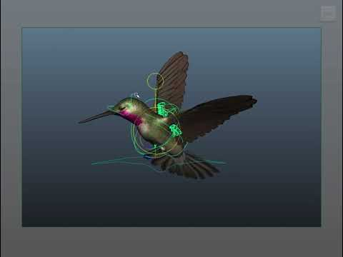 Animation Rig: Hummingbird