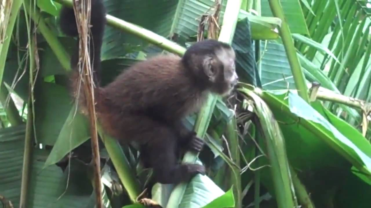 peru 2010 monkeys in the jungle youtube