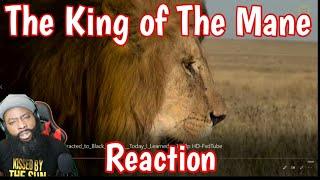 Fun facts about a Lion's Mane! #Animals #BeardSamson #Beardgang #DemGainz #Reaction