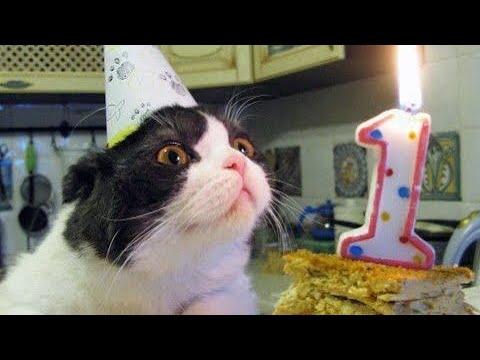 Célèbre Tanti auguri - Buon onomastico - Buon compleanno - YouTube YI41