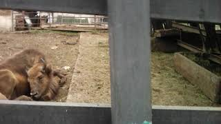 Заключение:я не успел записать весь зоопарк(((//-Роев Ручей-//-ВЛОГ-МАСТЕРА