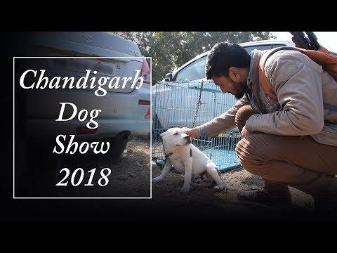 Chandigarh Dog Show 2018