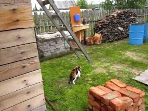 ВХОД с собаками запрещён! - территория МАШИ!