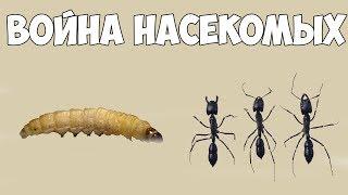 Война насекомых!