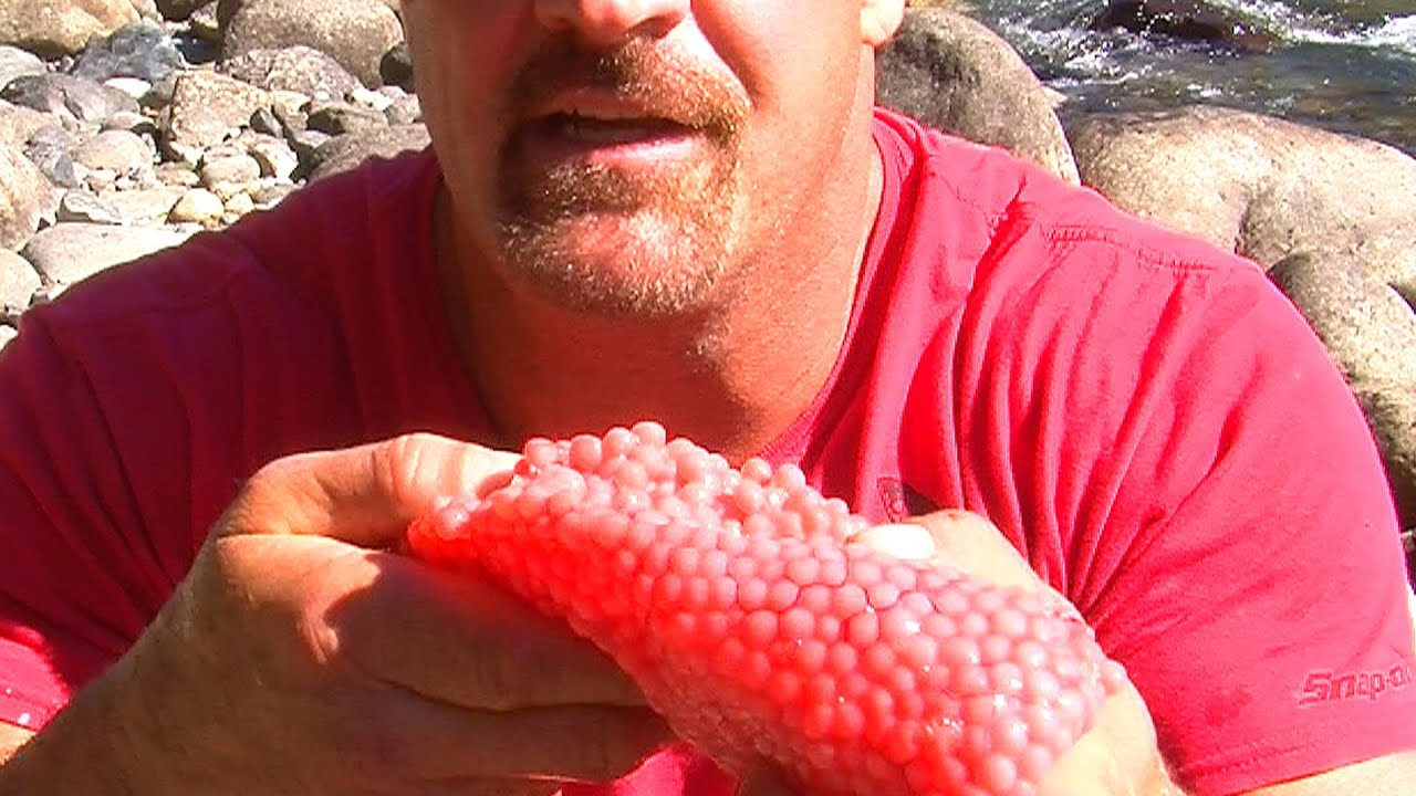 Caviar eating raw fish eggs youtube for How to prepare caviar