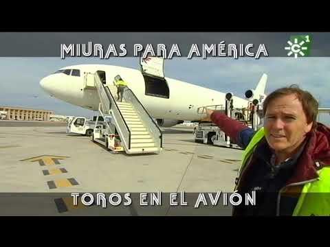 Toros de Miura embarque para América: vuelo en avión Sevilla - Lima (Perú) | Toros desde Andalucía