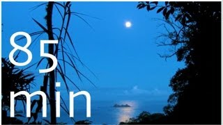 Rainforest - Sounds at Full Moon - 1,5 HOUR Nature Sounds #4 - Costa Rica Slow TV Soundscapes