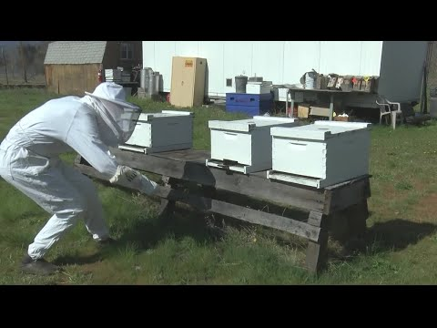 Missoula company using new technology to help beekeepers
