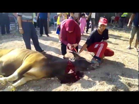 Kurban Kesen Kadın. KKB 2015 Female butcher. Sheep were cut. Kurban kesimi.