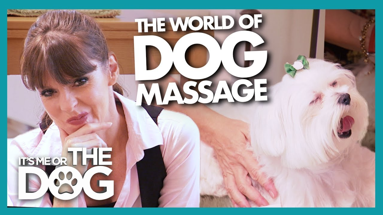 Victoria Gets Jealous as New York Dogs receive 5-Star Pampering! | It's Me or The Dog