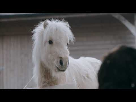 'To me, you are perfect': Teddy The Shetland melts hearts in festive film special
