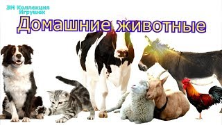 Домашние животные и их голоса