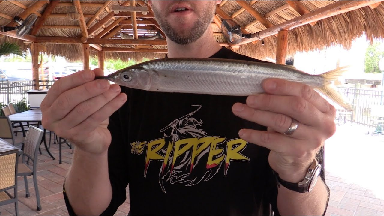 Rigging Ballyhoo: How To Rig A Skirted Ballyhoo The Quick Way