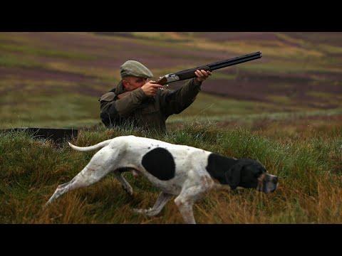 كلاب الصيد – أفضل 6 كلاب الصيد في العالم || the best hound dogs