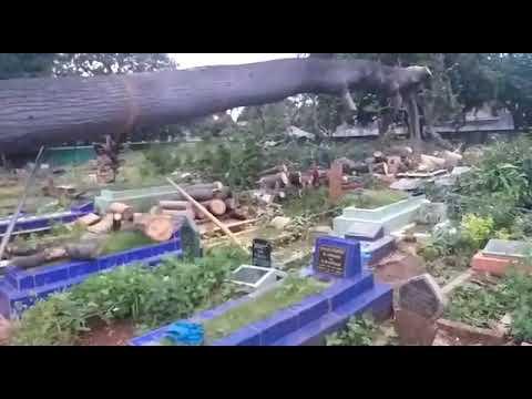 Detik Detik Pohon Makam Keramat Berdiri Lagi