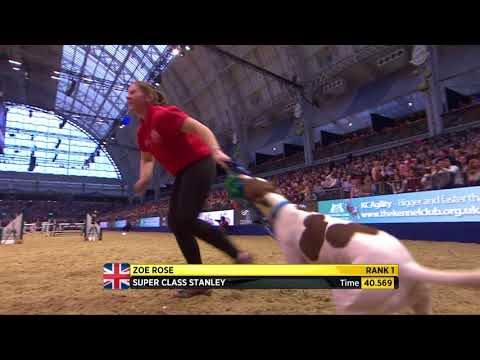 The Kennel Club Large Novice Dog Jumping Grand Prix at Olympia 2017