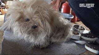 어쩌면 아무도 몰랐을 이야기 ㅣ The Unknown Story Behind A Poor Dog Unfolds Now