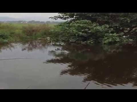 Câu cá rô phi  -Mùa lũ-Huế-2015
