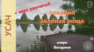 Русская рыбалка 4 озеро Янтарное Усач и карп рамчатый