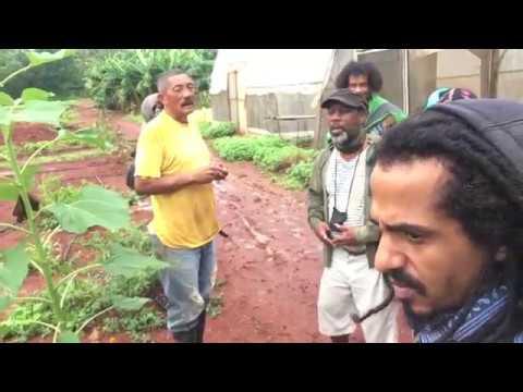 Organoponico Vivero Alamar: Organic Cuban Farm