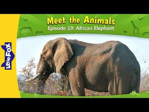 Meet the Animals 19: African Elephant | Level 2 | By Little Fox
