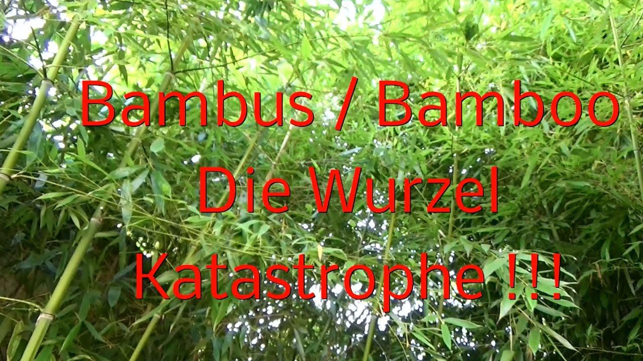 Bambus Bamboo Wurzel Katastrophe Youtube