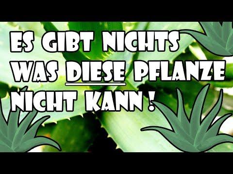 Ich habe mit vielem gerechnet, aber was diese Pflanze alles kann, sicher nicht!