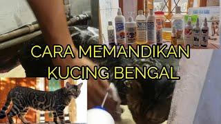 """Cara Memandikan Kucing Bengal """"BEPE"""""""