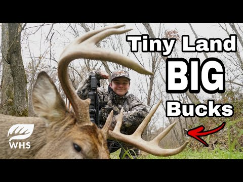 #1 Big Buck Strategy For Small Deer Hunting Parcels
