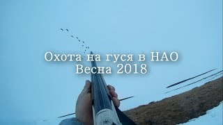 Охота на гуся в НАО весна 2018 Goose hunting