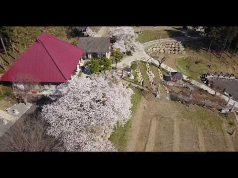 春の観音寺、空撮映像を有志の方から頂戴しました