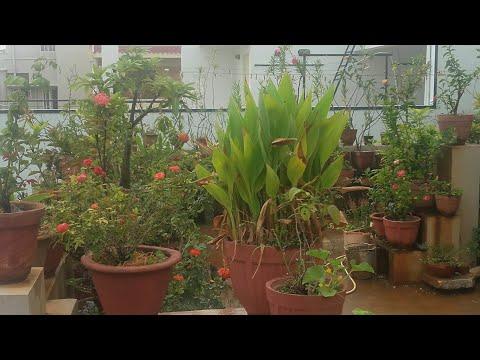Morning garden escape with Urban Scape Bangalore