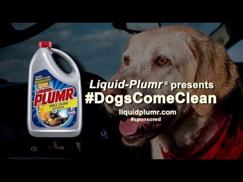 Denver the Guilty Dog and Liquid-Plumr present #DogsComeClean