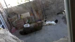 Mi perro y gato jugando