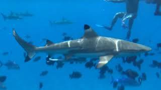 フランス領ポリネシア、タヒチ・ボラボラ島。ボラボラ島は、世界の海を...