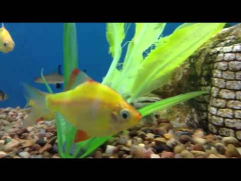 Petsmart vlog haul also my new fish doovi for How much are fish at petsmart