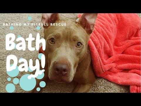 Bathing my Rescue Pitbull | Zazu Bath Day
