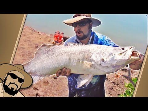 A Day Of Surprises (BIG Land Based Barra Fishing In URBAN CREEK)