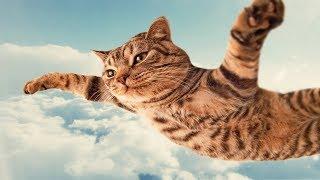 Приколы 2019 года с кошками и собаками 100 смеха