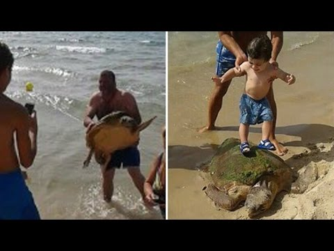 Turtle Stood On For Selfies and Beaten On Beach Gets Rescued