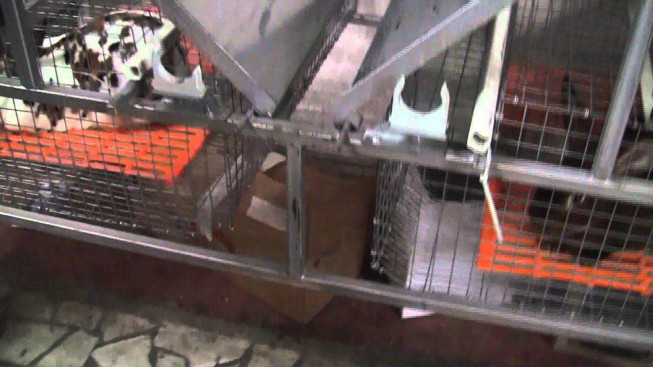 Клетка для промышленного содержания кроликов - YouTube