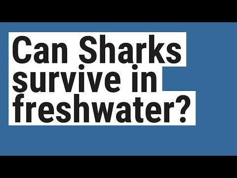 Can Sharks Survive In Freshwater?