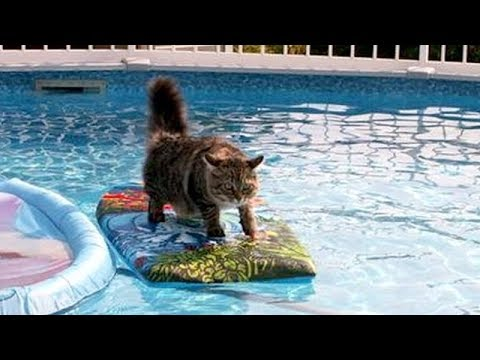 ANIMALS SO FUNNY it's simply IMPOSSIBLE NOT TO LAUGH! – Hilarious ANIMAL VIDEOS compilation