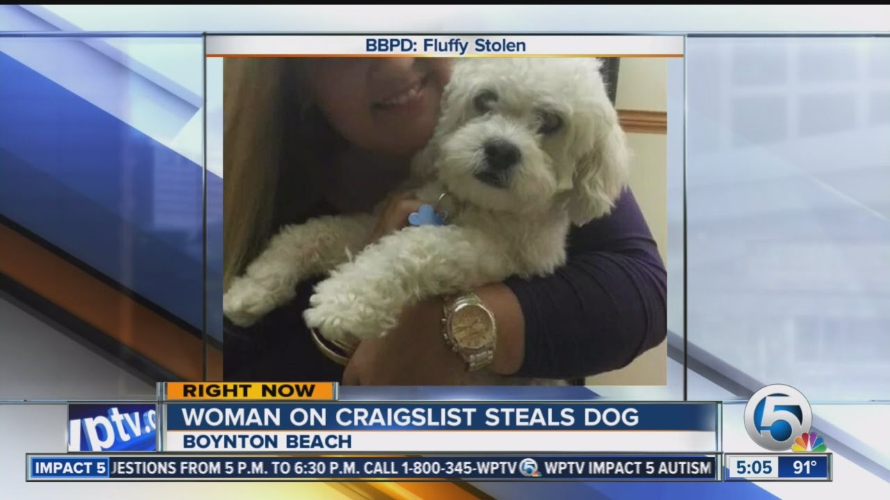 how to buy a dog on craigslist