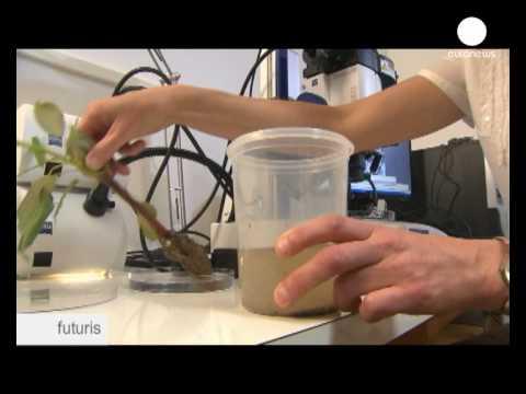 Biofuels: The Cellulose Barrier - Futuris