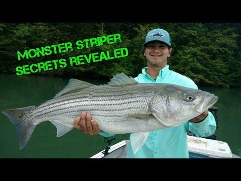Striper Fishing Cherokee Lake- Part II