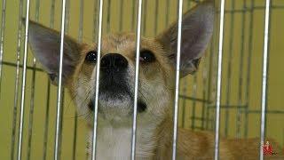 Собака по кличке «Люси». История, о которой все должны знать