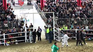 2018年1月3日 徳之島闘牛 全島一 平山美龍vs武捷龍